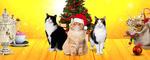 Новогодняя сказка «КАК КОТЫ СПАСЛИ ФЕДОРУ»