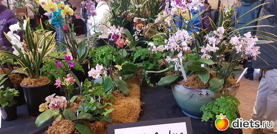 52 фото: Орхидеи