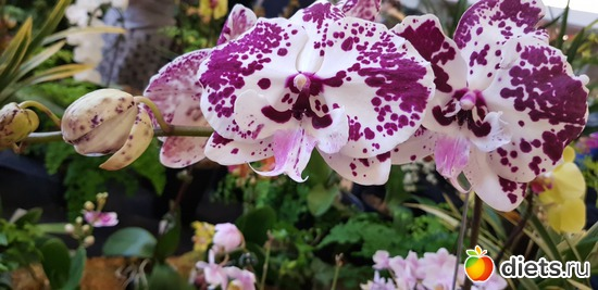 53 фото: Орхидеи