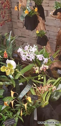 1 фото: Орхидеи