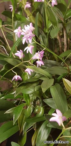4 фото: Орхидеи