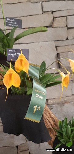 5 фото: Орхидеи