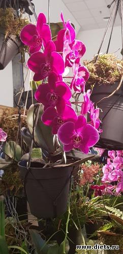 6 фото: Орхидеи