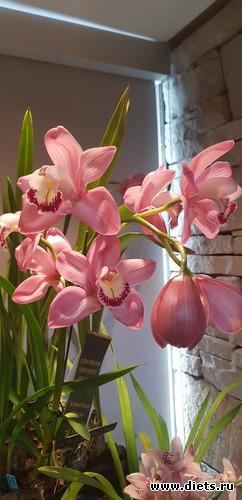 10 фото: Орхидеи