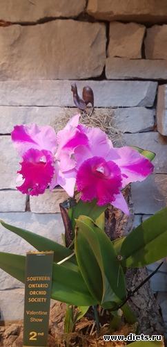 11 фото: Орхидеи