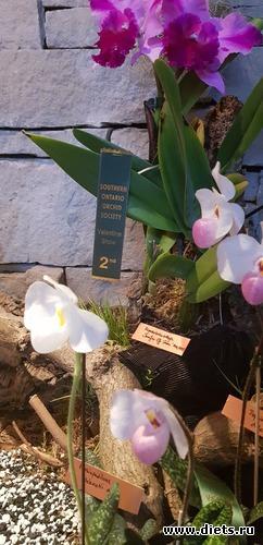12 фото: Орхидеи