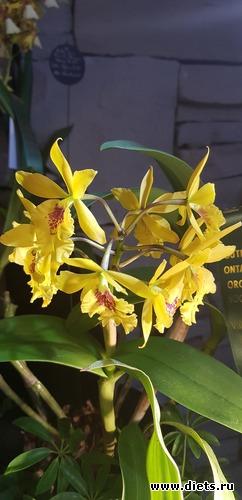 16 фото: Орхидеи