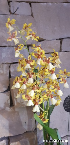 17 фото: Орхидеи