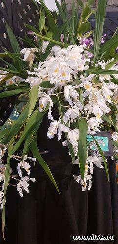 19 фото: Орхидеи