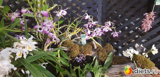 20 фото: Орхидеи