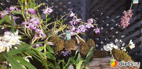 21 фото: Орхидеи