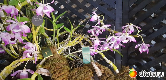 22 фото: Орхидеи