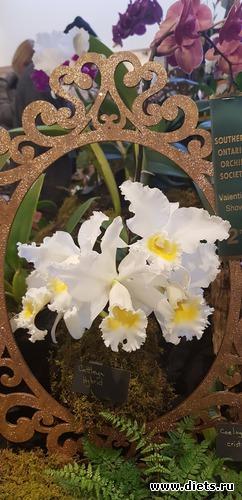 23 фото: Орхидеи