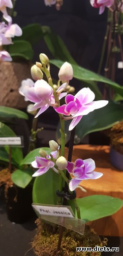 25 фото: Орхидеи