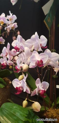 26 фото: Орхидеи