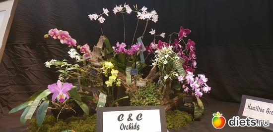 27 фото: Орхидеи