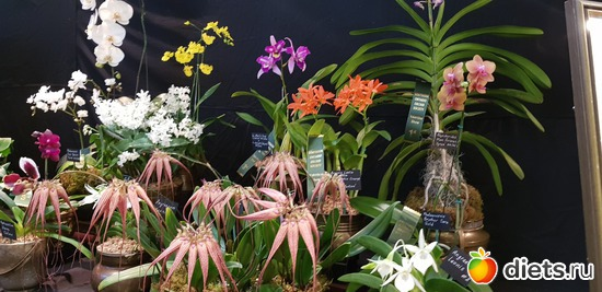 30 фото: Орхидеи