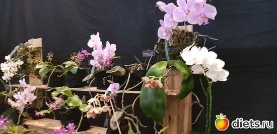 33 фото: Орхидеи