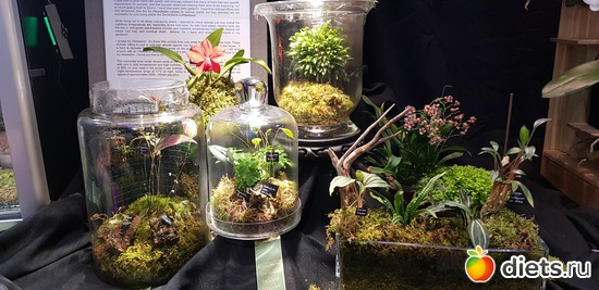 34 фото: Орхидеи