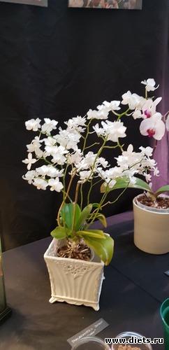 37 фото: Орхидеи