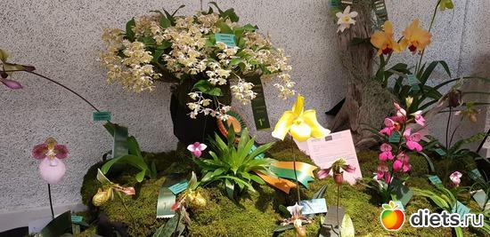 39 фото: Орхидеи