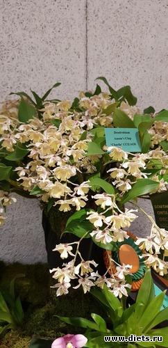 41 фото: Орхидеи