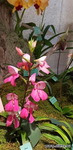 42 фото: Орхидеи