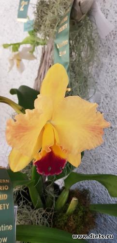 43 фото: Орхидеи