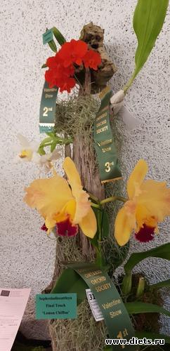 44 фото: Орхидеи