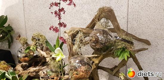45 фото: Орхидеи