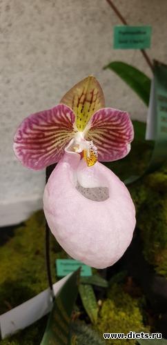 46 фото: Орхидеи