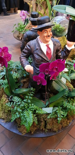 47 фото: Орхидеи