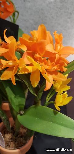 48 фото: Орхидеи