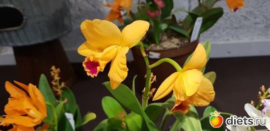 49 фото: Орхидеи