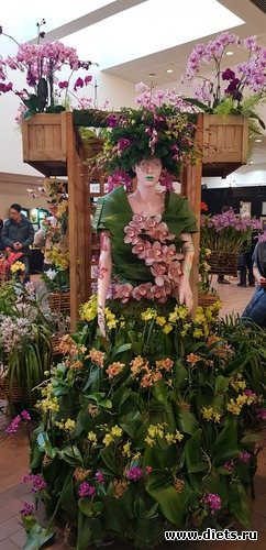 62 фото: Орхидеи