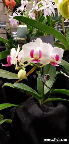 64 фото: Орхидеи