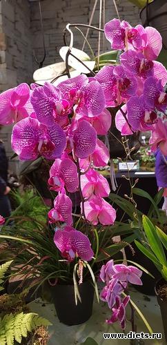 66 фото: Орхидеи
