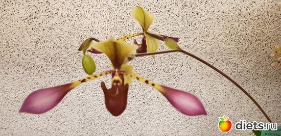 67 фото: Орхидеи