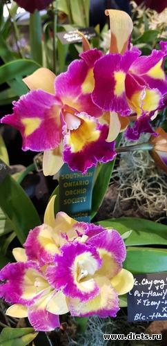 70 фото: Орхидеи