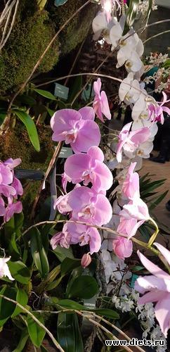 58 фото: Орхидеи