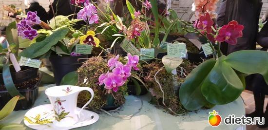 59 фото: Орхидеи