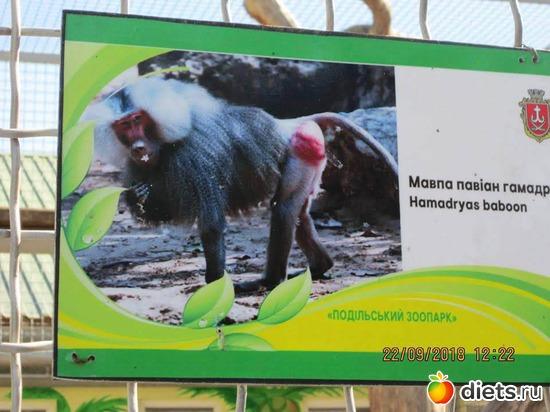 6 фото: Винницкий зоопарк