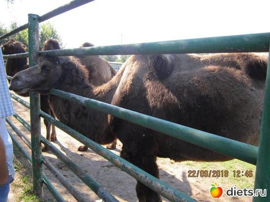 8 фото: Винницкий зоопарк