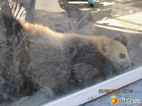 9 фото: Винницкий зоопарк