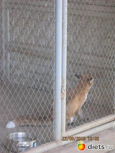 12 фото: Винницкий зоопарк
