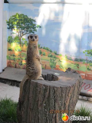 14 фото: Винницкий зоопарк