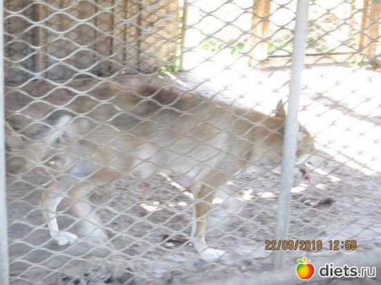 15 фото: Винницкий зоопарк