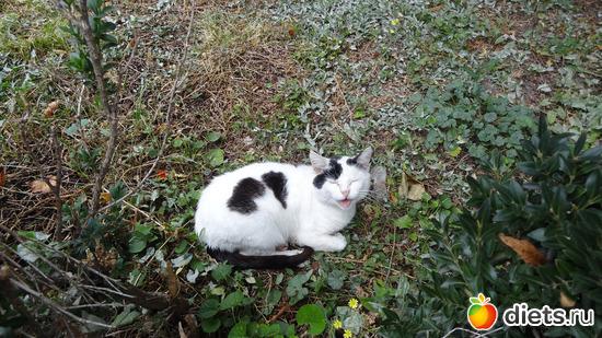 милая кошечка, альбом: Кошки