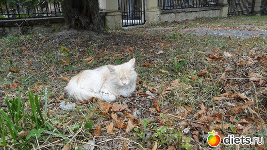 """рядом с санаторием """"Шахтер"""" (Ессентуки), альбом: Кошки"""