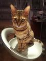 Наш независимый кот Дарик
